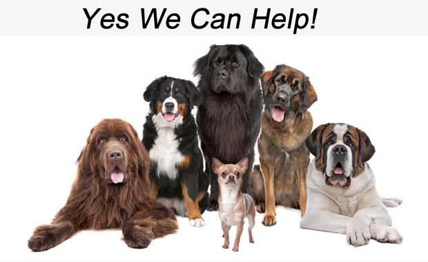 we can help all your dogs Love you love my dog Pet salon