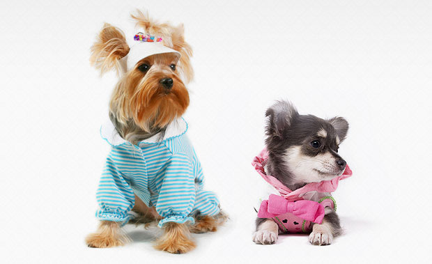 2 very cute dressed up dogs